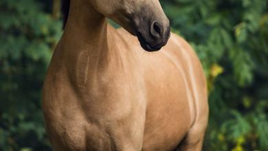 Pferde Verkauf De Für Whatsapp 390x220 - Pferde Verkauf De Für Whatsapp