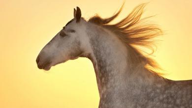 Pferde Verkaufen Schweiz Für Facebook 390x220 - Pferde Verkaufen Schweiz Für Facebook