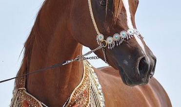 Pferde Verkaufen Schweiz Für Whatsapp 371x220 - Pferde Verkaufen Schweiz Für Whatsapp
