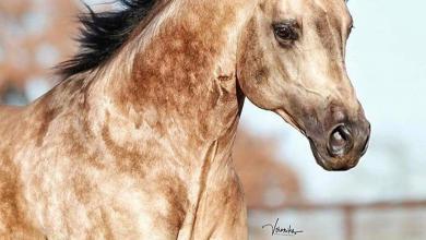 Pferde Verkaufen Schweiz Kostenlos Herunterladen 390x220 - Pferde Verkaufen Schweiz Kostenlos Herunterladen