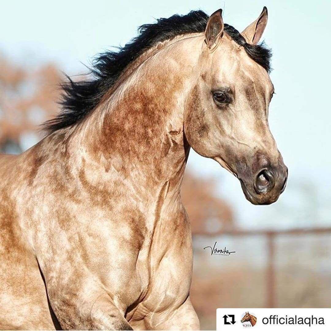 Süße Pferde Bilder Kostenlos Downloaden Bilder Und Sprüche