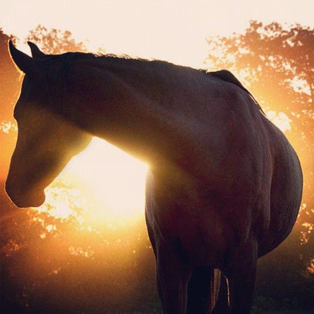 Pferde Videos - Pferde Videos
