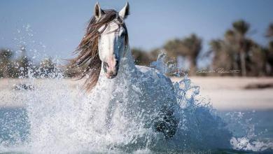 Pferde Wallpaper Für Facebook 390x220 - Pferde Wallpaper Für Facebook