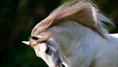 Pferde Weinrich Für Facebook 390x220 - Pferde Weinrich Für Facebook
