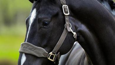 Pferde Weinrich Kostenlos Herunterladen 390x220 - Pferde Weinrich Kostenlos Herunterladen