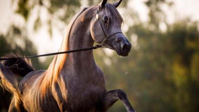 Pferde Züchter Kostenlos Herunterladen 390x220 - Pferde Züchter Kostenlos Herunterladen