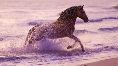 Pferde Zu Verschenken 390x220 - Pferde Zu Verschenken