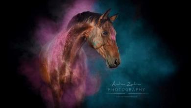 Pferdeanzeiger Für Facebook 390x220 - Pferdeanzeiger Für Facebook