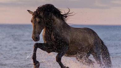 Pferdebild Leinwand Für Facebook 390x220 - Pferdebild Leinwand Für Facebook