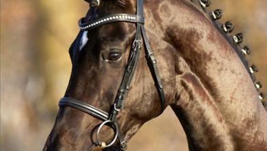 Pferdebilde Kostenlos Herunterladen 390x220 - Pferdebilde Kostenlos Herunterladen