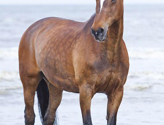 pferdebilder friesen für whatsapp  bilder und sprüche für
