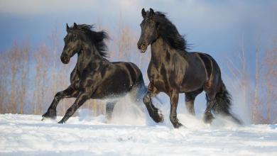 Pferdebilder Kaufen Kostenlos Downloaden 390x220 - Pferdebilder Kaufen Kostenlos Downloaden