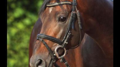 Pferdebilder Kostenlos Herunterladen 390x220 - Pferdebilder Kostenlos Herunterladen