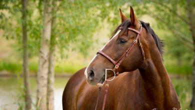 Pferdebilder Kostenlos Herunterladen Für Facebook 390x220 - Pferdebilder Kostenlos Herunterladen Für Facebook