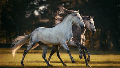 Pferdebilder Kostenlos Herunterladen Kostenlos Downloaden 390x220 - Pferdebilder Kostenlos Herunterladen Kostenlos Downloaden