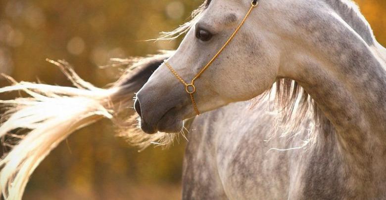 Lustige Pferdebilder Kostenlos