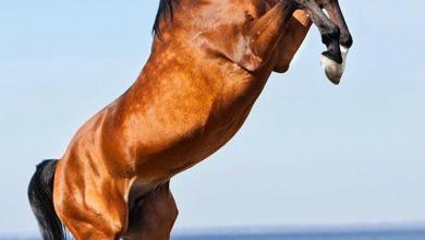 Pferdebilder Pferde Bilder Für Whatsapp 390x220 - Pferdebilder Pferde Bilder Für Whatsapp