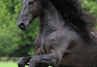 Pferdefoto Für Whatsapp 320x220 - Pferdefoto Für Whatsapp