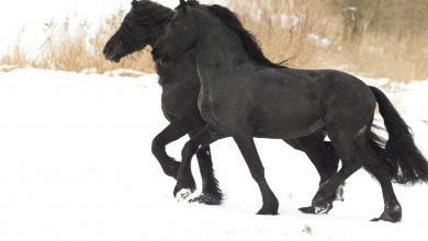 Pferdefoto Kostenlos Herunterladen 390x220 - Pferdefoto Kostenlos Herunterladen