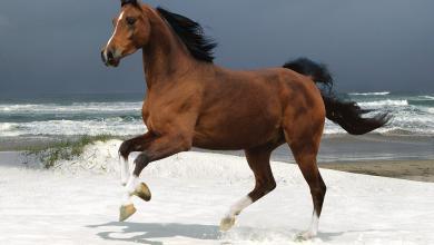 Pferdefotografie Für Whatsapp 390x220 - Pferdefotografie Für Whatsapp