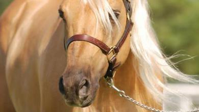 Pferdefotografie Kostenlos Downloaden 390x220 - Pferdefotografie Kostenlos Downloaden
