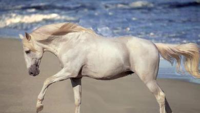 Pferdegestüt Für Whatsapp 390x220 - Pferdegestüt Für Whatsapp