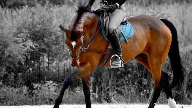 Pferdehaltung Kostenlos Herunterladen 390x220 - Pferdehaltung Kostenlos Herunterladen