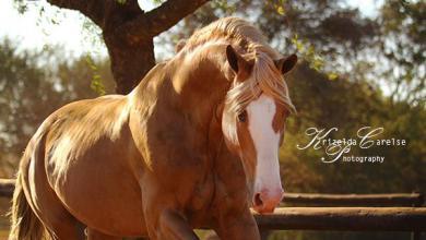 Pferdehof Verkaufspferde Für Facebook 390x220 - Pferdehof Verkaufspferde Für Facebook