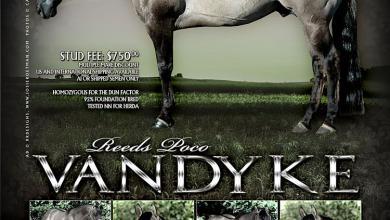 Pferdehof Verkaufspferde Kostenlos Herunterladen 390x220 - Pferdehof Verkaufspferde Kostenlos Herunterladen