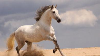 Pferdekauf Kostenlos Downloaden 390x220 - Pferdekauf Kostenlos Downloaden
