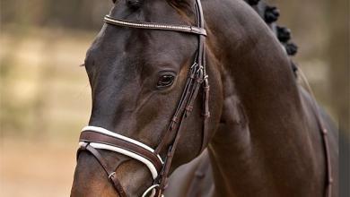 Pferdekopf Bilder Für Facebook 390x220 - Pferdekopf Bilder Für Facebook
