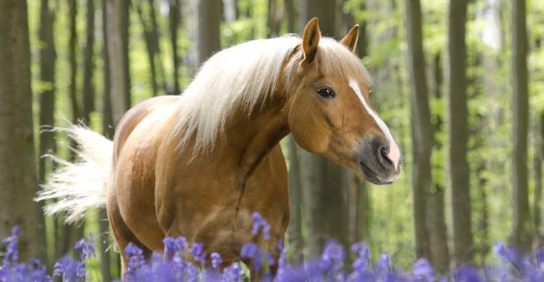 Pferderassen Bilder Kostenlos Downloaden | Bilder und