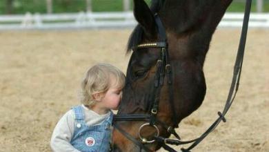 Pferderassen Mit Bild Für Facebook 390x220 - Pferderassen Mit Bild Für Facebook