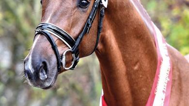 Pferderassen Und Bilder Für Facebook 390x220 - Pferderassen Und Bilder Für Facebook
