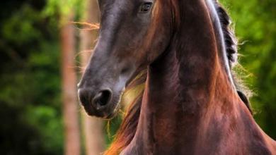 Pferdeverkauf Kostenlos Downloaden 390x220 - Pferdeverkauf Kostenlos Downloaden