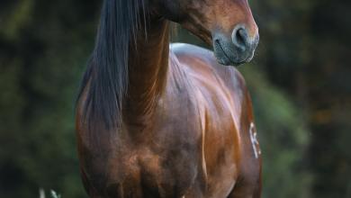 Pferdeverkauf Kostenlos Herunterladen 390x220 - Pferdeverkauf Kostenlos Herunterladen