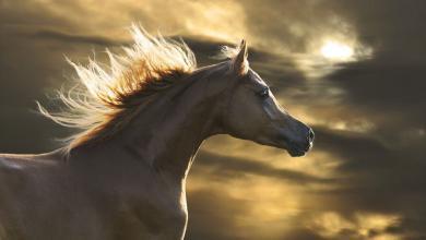 Pferdezucht Kostenlos Herunterladen 390x220 - Pferdezucht Kostenlos Herunterladen
