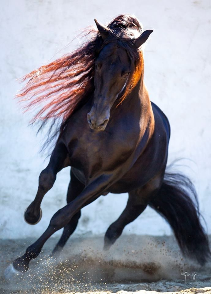 Pinto Pferd Für Whatsapp - Pinto Pferd Für Whatsapp