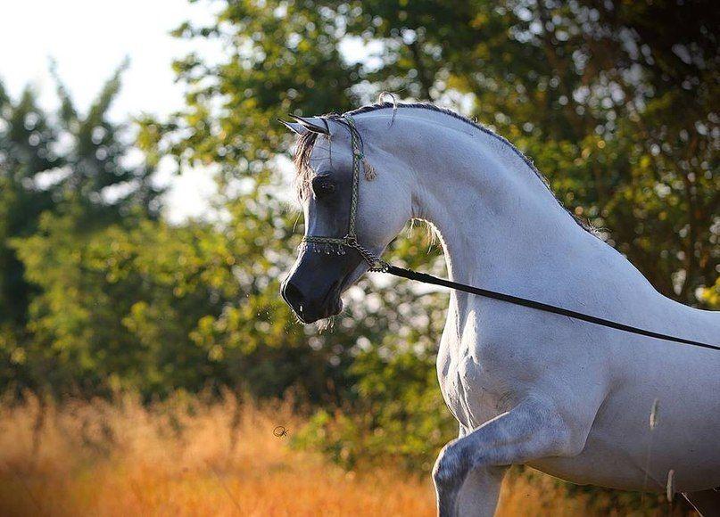 Ponys Und Pferde Zu Verkaufen Für Whatsapp - Ponys Und Pferde Zu Verkaufen Für Whatsapp