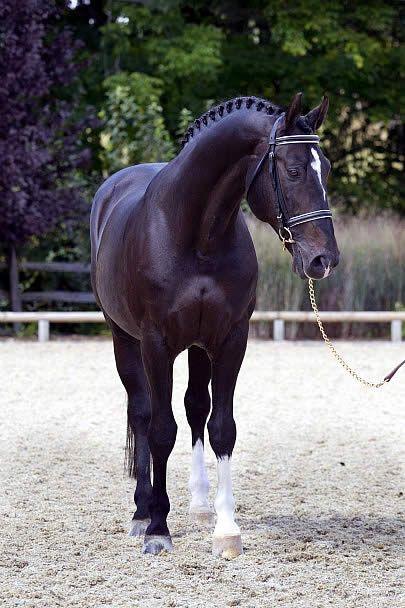 Ponys Und Pferde Zu Verkaufen - Ponys Und Pferde Zu Verkaufen