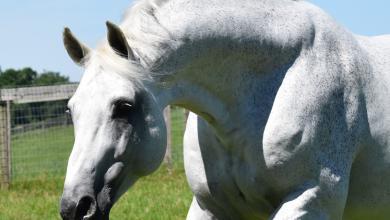 Privat Pferde Kaufen 390x220 - Privat Pferde Kaufen