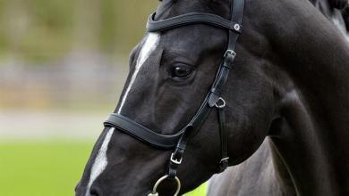 Privat Pferde Kaufen Für Facebook 390x220 - Privat Pferde Kaufen Für Facebook