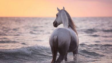 Przewalski Pferd Bilder Für Facebook 390x220 - Przewalski Pferd Bilder Für Facebook