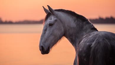 Przewalski Pferd Bilder Für Whatsapp 390x220 - Przewalski Pferd Bilder Für Whatsapp