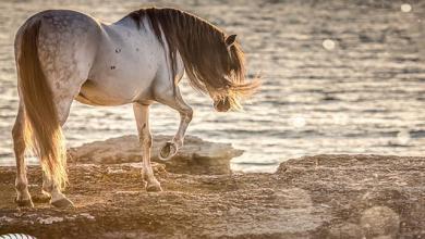 Przewalski Pferd Kaufen Für Whatsapp 390x220 - Przewalski Pferd Kaufen Für Whatsapp