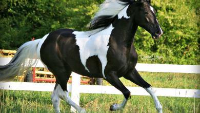 Przewalski Pferd Reiten Für Facebook 390x220 - Przewalski Pferd Reiten Für Facebook