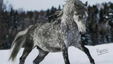 Reiten Pferde Kostenlos Herunterladen 390x220 - Reiten Pferde Kostenlos Herunterladen
