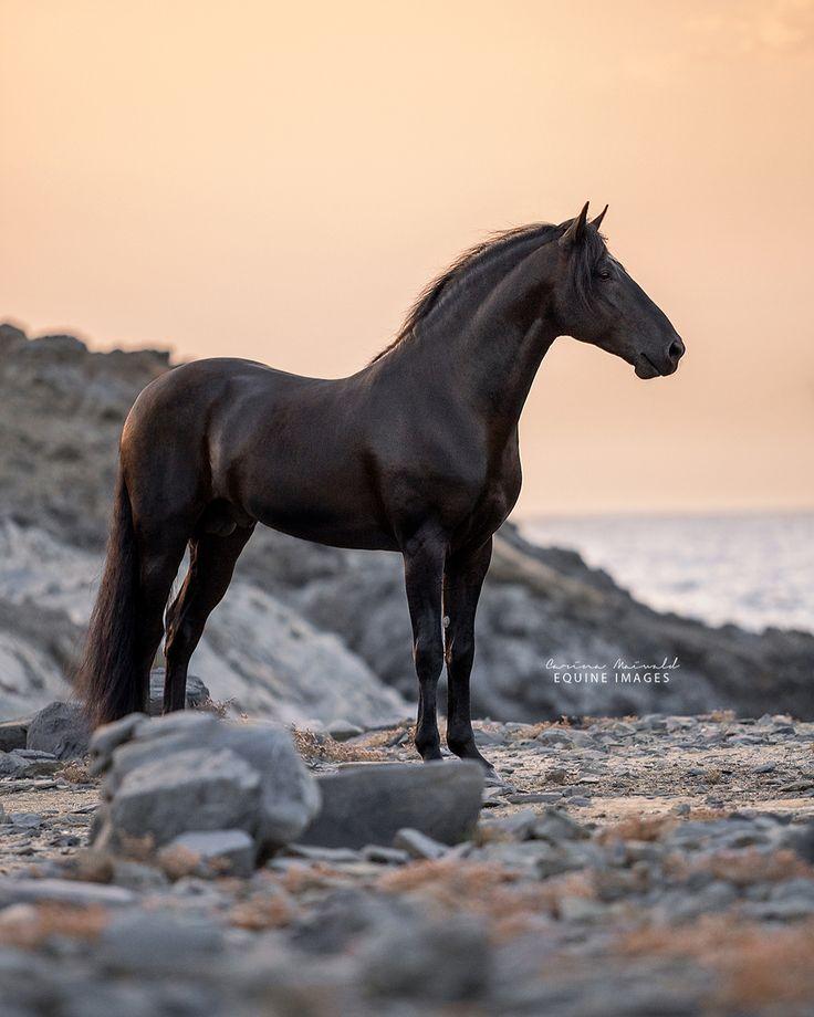 reiter und pferde für whatsapp  bilder und sprüche für