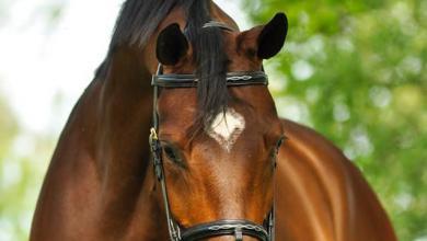 Reiter Und Pferde Kostenlos Herunterladen 390x220 - Reiter Und Pferde Kostenlos Herunterladen