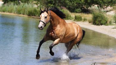 Süße Pferde Bilder 390x220 - Süße Pferde Bilder